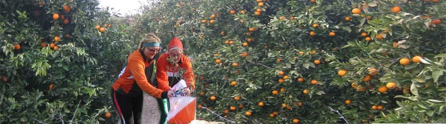 ANTALYA ORIENTEERING FESTIVAL, TURKKI